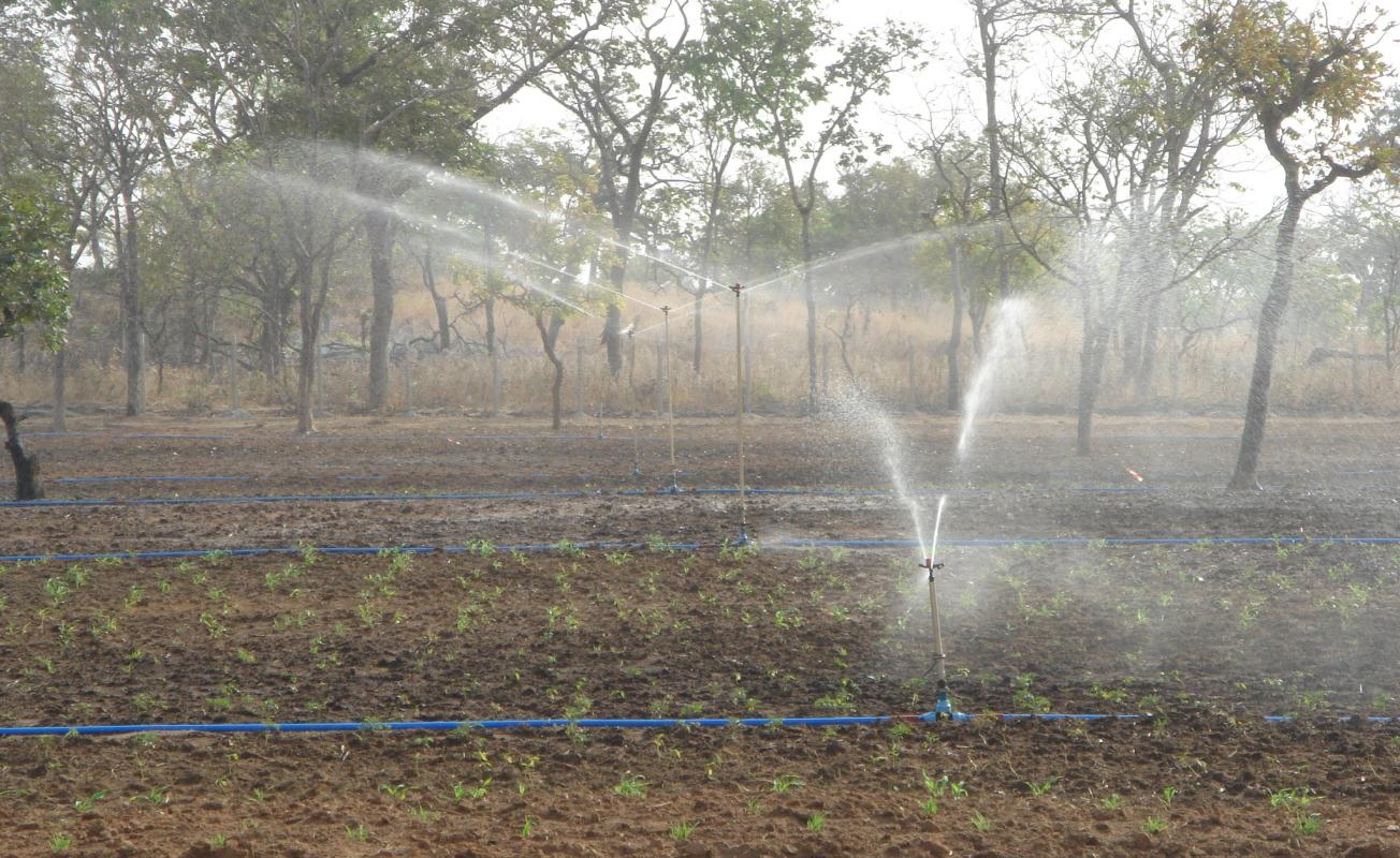 Gurara Irrigation Project (2,000Ha)